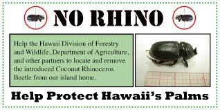 no rhino